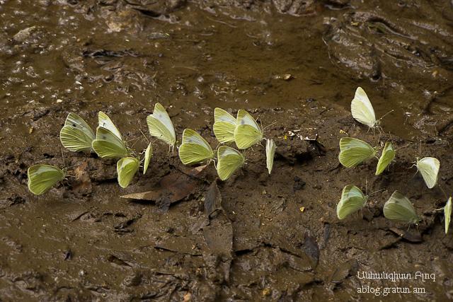 Marquez Butterflies