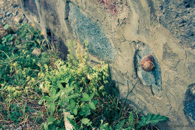 Խխունջը պատի վրա