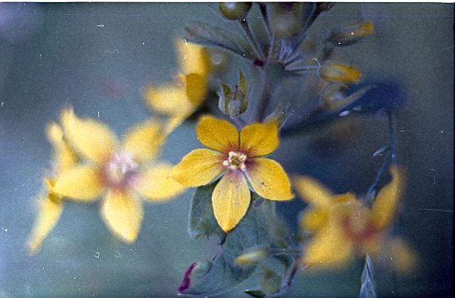 Մակրո․ Ծաղիկ