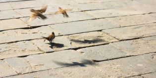 [Լուսանկար] Մանր մունր հրեշտակներ